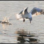 FAU18-Fly away