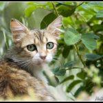 FAU58 - Portrait of a cat