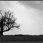 MON21 - Lonely tree
