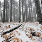 Winter Idyllic landscape at Troodos mountains in Cyprus